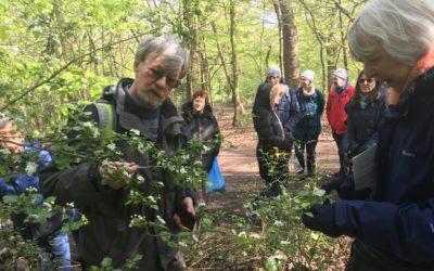 Queen's Wood Tree Walk